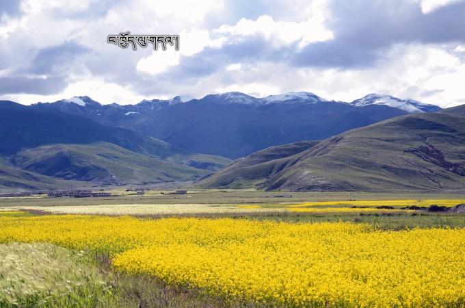 西藏┇那区地区-山南地区-日喀则地区-拉萨-林芝地区【毕业旅行第七站