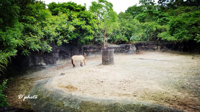 真幸运,哈哈 蒙古马,也是一种快绝迹的动物 非洲动物园区,指示牌也很