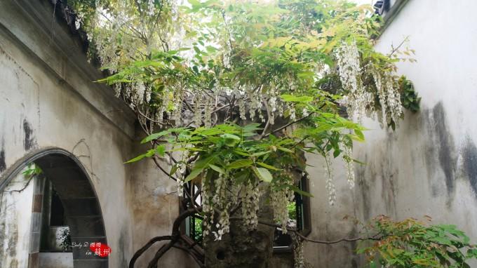 落叶树与常绿树相间,花时不同的多种花树相间,这就一年四季不感到寂寞