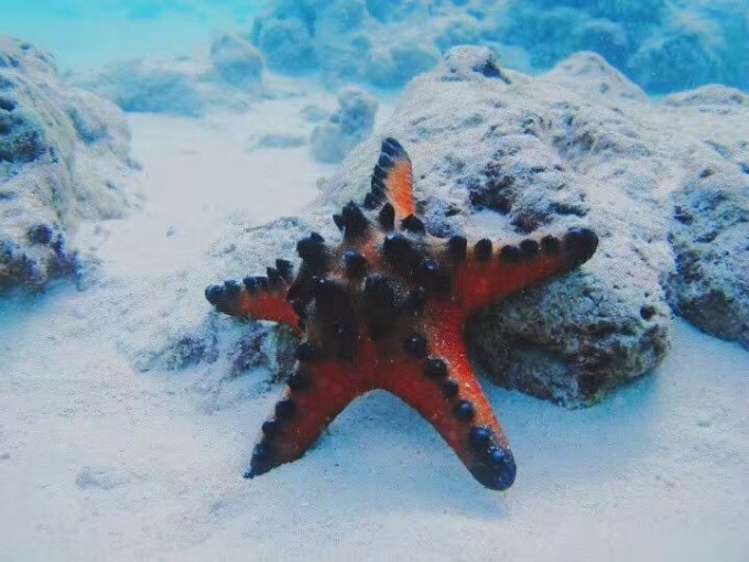 超详细菲律宾长滩岛游记