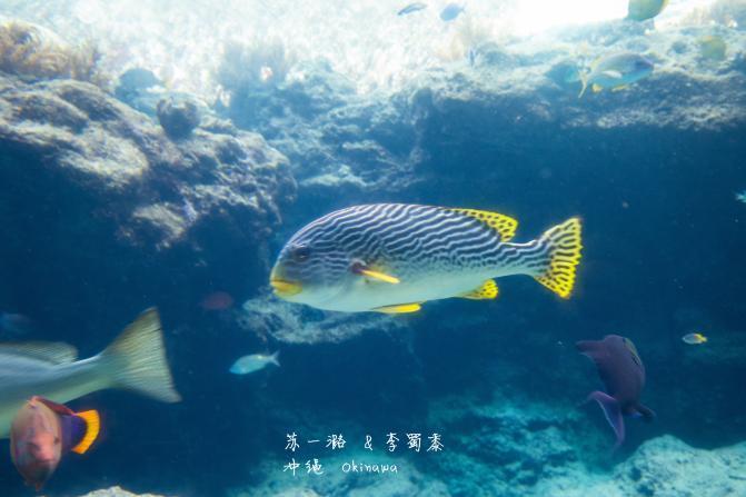 壁纸 动物 海底 海底世界 海洋馆 水族馆 鱼 鱼类 671_447