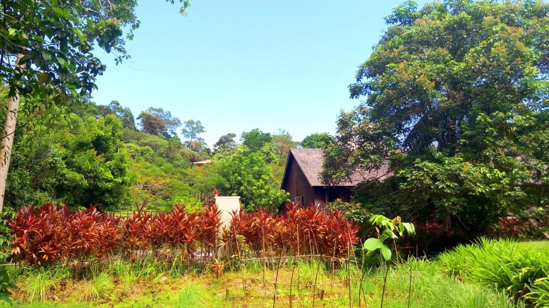 亚洲 马来西亚 砂拉越州 古晋市 - 西部落叶 - 《西部落叶》· 余文博客